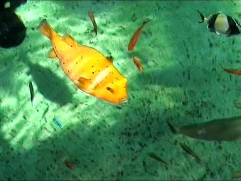 vídeos de stock, filmes e b-roll de peixes tropicais coloridos - equipamento de esporte aquático