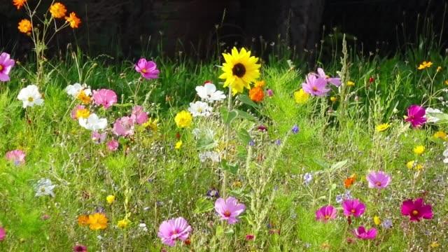 vídeos de stock e filmes b-roll de colorful wildflowers in summer - granadilha