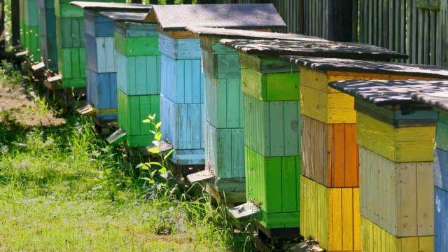 colorful wooden beehives in summer garden, poland - apicoltura video stock e b–roll