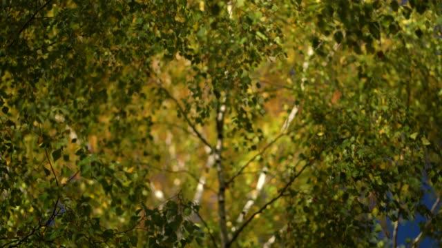 Colors of Autumn. Close-up focus concept 4k resolution.