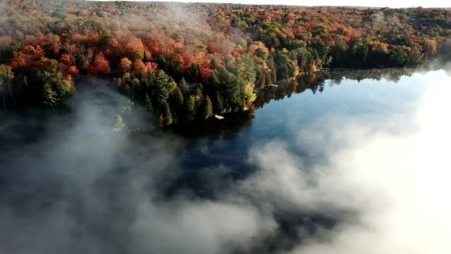 Colourful autumn forest and blue lake, aerial top drone view - video