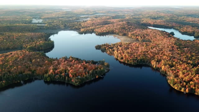 Video Colourful autumn forest and blue lake, aerial top drone view