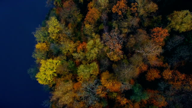 Colourful autumn forest and blue river, aerial top drone view video