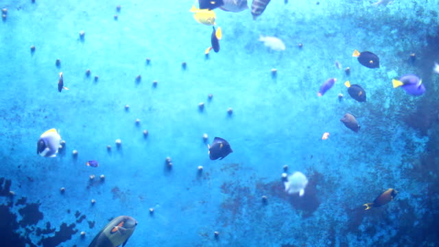 Colourful Fish影片