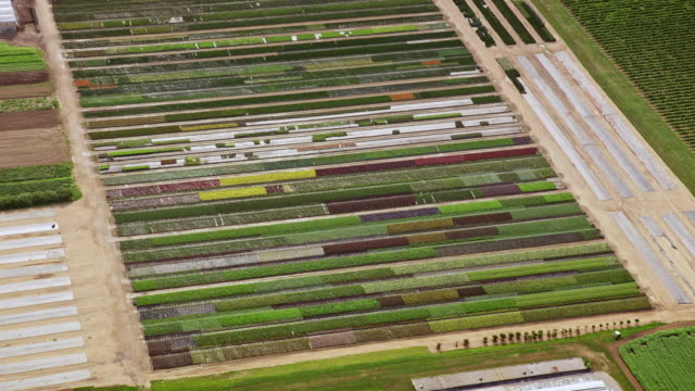 Video AERIAL Colourful rows of plants on a farm in Ontario