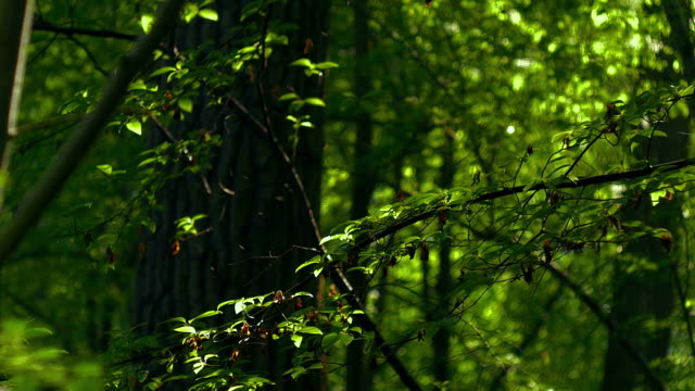 Colourfull green. Retro look Forest. Summertime video