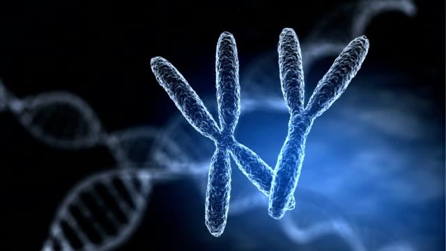 vídeos y material grabado en eventos de stock de combinaciones de los cromosomas - cromosoma