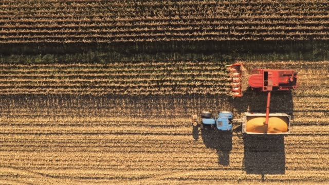 AERIAL Combine and tractor harvesting corn crops