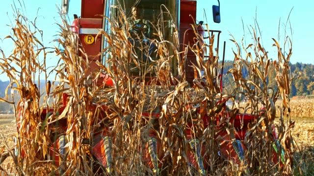 SLO MO Combine cutting corn stalks