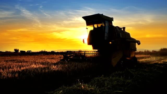 combine, field and sunrise. reach success in agribusiness - attività agricola video stock e b–roll