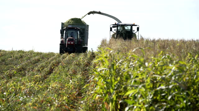 Combine harvester and tractor and trailer as it empties corn in field on summers day - video