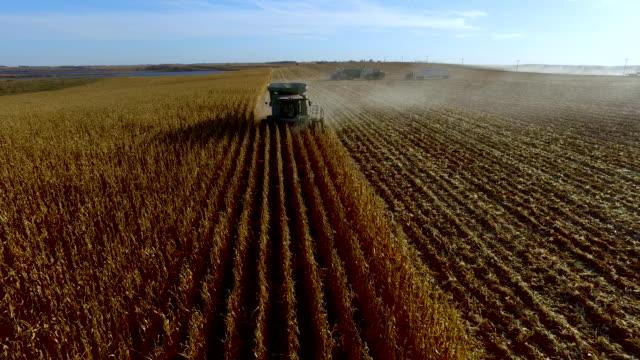 vídeos de stock e filmes b-roll de combine harvester approaching and passing with top down view - vídeos de milho