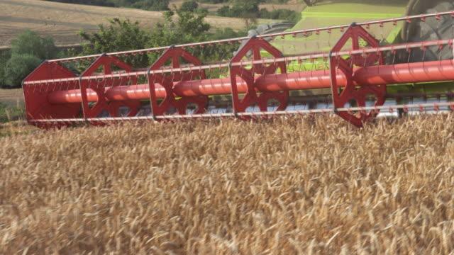 combine harvester close up. harvester, harvesting wheat. - stelo video stock e b–roll