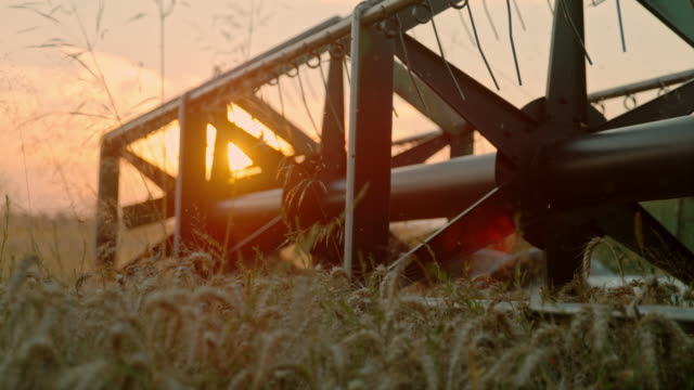 SLO MO Combine harvester cutting wheat at sunset