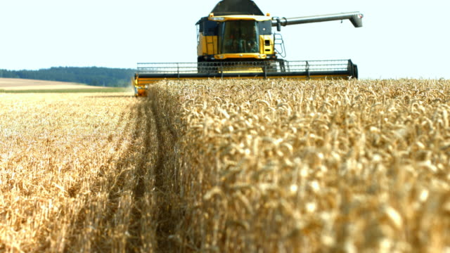 combine harvester cutting wheat - agricultural machinery stock videos & royalty-free footage