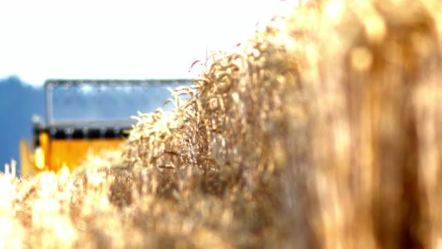 stockvideo's en b-roll-footage met combineer harvester cutting tarwe - kleine scherptediepte