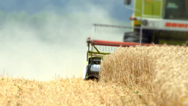 Combine Harvester Cutting Wheat Real time shot made in 4K/Ultra High Definition. wheat stock videos & royalty-free footage