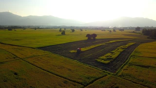 コンバインは、朝の日差しの中で水田で米を収集します。 - 稲点の映像素材/bロール