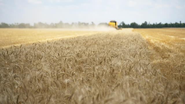hasat birleştirin buğday mahsulü toplar. buğday hasadı makasları. gıda endüstrisi konsepti alanında birleştirir. - çavdar stok videoları ve detay görüntü çekimi