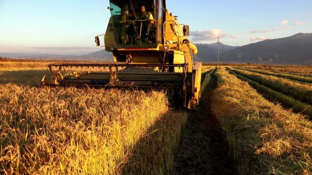 uhd kombinieren harvester sammelt die weizenernte, sony 4k-shooting - reis grundnahrungsmittel stock-videos und b-roll-filmmaterial