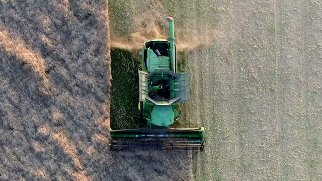 combine harvester harvesting rapeseed (aerial view) - gluten free stock videos and b-roll footage