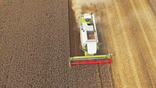 Combine Harvester Harvesting Wheat Flyover video