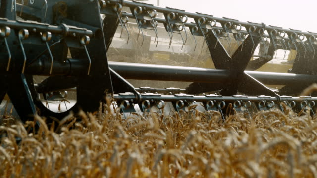 SLO MO Combine harvester harvesting wheat
