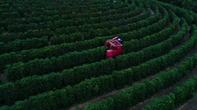 combine harvester in brazil harvesting coffee - coffee farmer video stock e b–roll