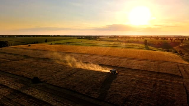 Combine harvester in sunlight at sunset. Harvesting wheat on the golden field. Aerial view.