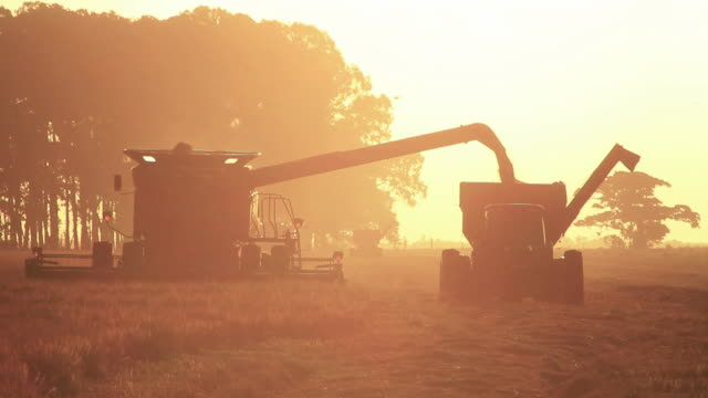Combine Harvester sunset video