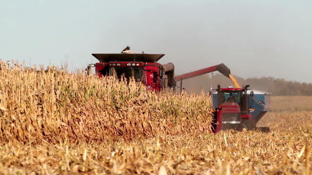Combine Harvester Transferring Corn to Tractor Pulling Trailer video
