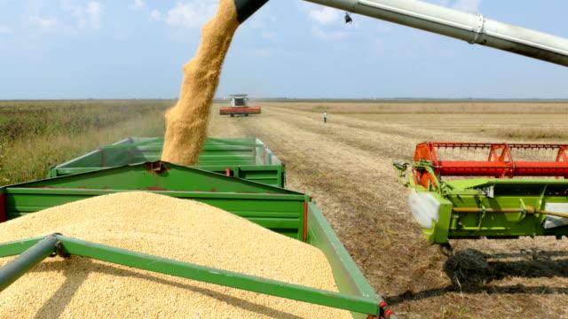 Combine harvester unloading soybean video