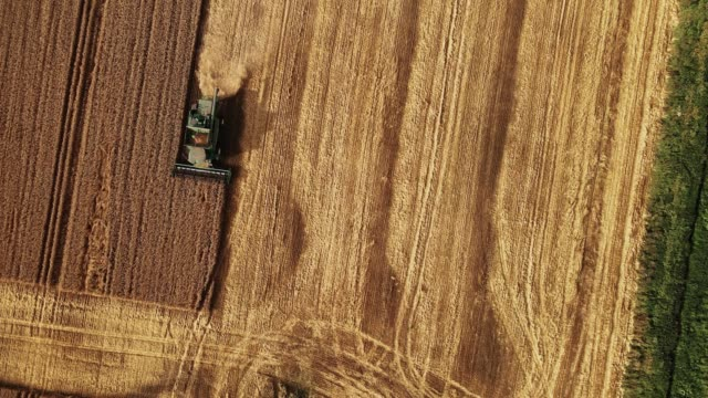 Combine harvester working in the field. Aerial shot