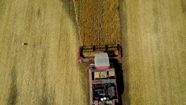 Combine Harvester Working video