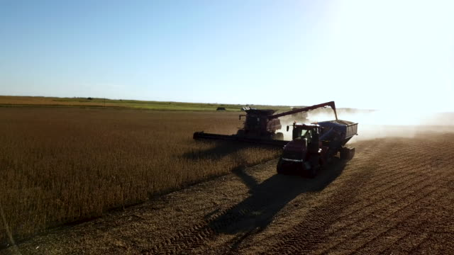 combine harvesters unloading auger into following tractor trailer - trattore video stock e b–roll