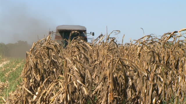 Combine Harvesting Corn 05 (Additional_Formats_Below) video