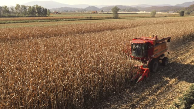 AERIAL Combine harvesting corn crops