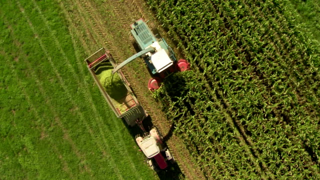 HD: Combine Harvesting Corn For Silage
