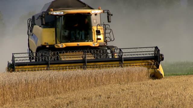 vídeos de stock, filmes e b-roll de combinar a colheita de trigo close-up - sem glúten