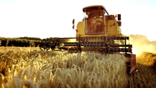 Combine Harvesting Wheat HD1080p: Super Slow Motion shot of a combine harvester cutting grain crops in the field of wheat. wheat stock videos & royalty-free footage