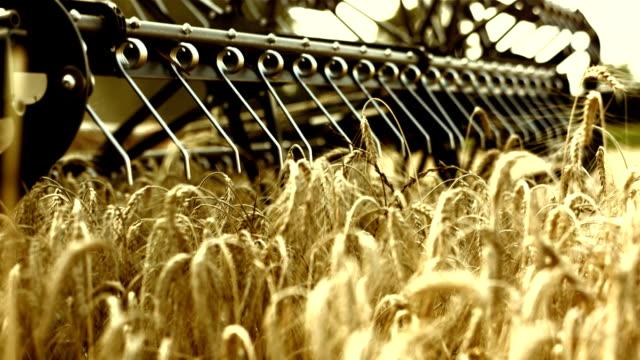 vídeos de stock e filmes b-roll de combinar cabeça de trigo - colher atividade agrícola