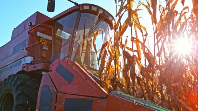 SLO MO Combine header cutting corn stalks in sunshine