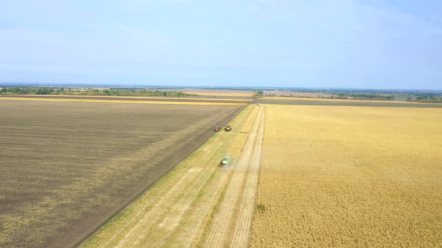 combine machines harvesting corn in the field aerial footage DNIPRO, UKRAINE - SEPTEMBER 14, 2019: combine machines harvesting corn in the field aerial footage agricultural occupation stock videos & royalty-free footage