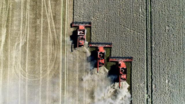 Combine machines harvesting field
