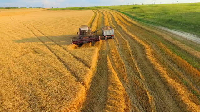 AERIAL VIEW. Combine on Harvest Field Loading Truck With Wheat. Wide Angle Shot video