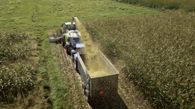 aerial combine reaping and blowing stalks onto tractor - agricultural machinery stock videos & royalty-free footage
