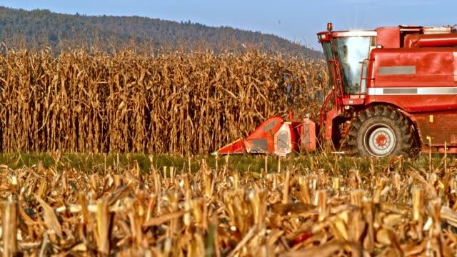 SLO MO Combine stripping corn stalks in sunshine