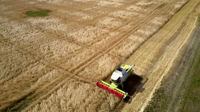 combine with red reaper works on wheat field by road side