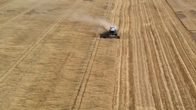 Combines in the field. Aerial view of harvesters. Season of gathering crops. Combines in the field. Aerial view of harvesters. Season of gathering crops. Rye and barley. rye grain stock videos & royalty-free footage