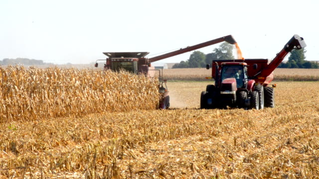 combining corn with grain cart, Illinois Combining corn. Combine is off loading corn to a grain cart while in motion. Heyworth, Illinois, USA. Nikon D7000. harvesting stock videos & royalty-free footage